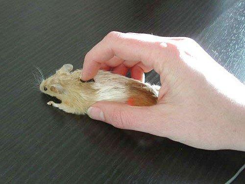 click chuột